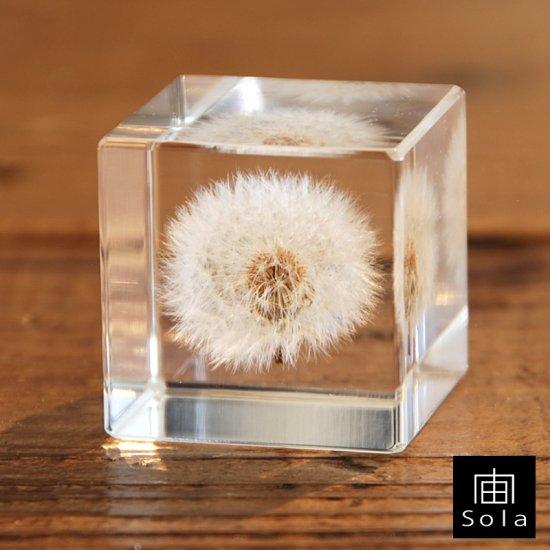 宙-sola- Sola cube タンポポ 4cm角