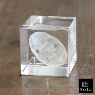 宙-sola- Sola cube ルナリア