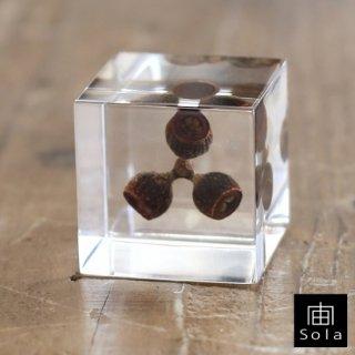 宙-sola- Sola cube ユーカリ