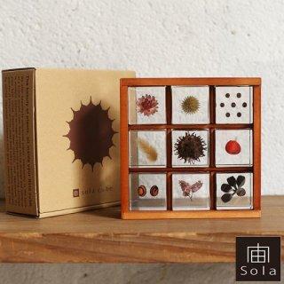 宙-sola- ソラ sola cube 標本箱木箱セット(9個入り)【送料無料】