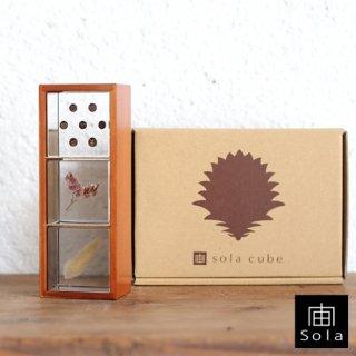 宙-sola- ソラ sola cube 3個セット(木箱付き) Aセット (フウセンカズラ・サマーチェリー・ウサギノオ)【送料無料】