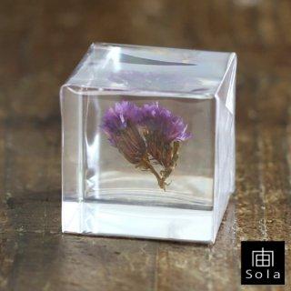 宙-sola- Sola cube スターチス