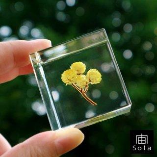 宙-sola- Sola cube イモーテル
