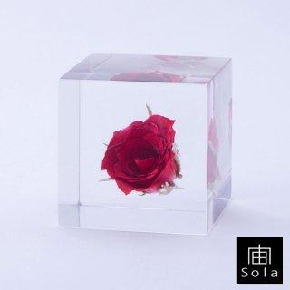 宙-sola- Sola cube バラ 薔薇【数量限定生産】
