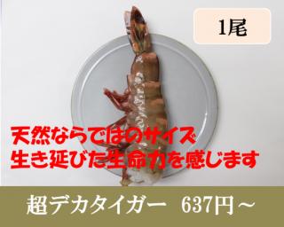 [通販限定]1尾・超デカタイガー(5L-7Lサイズ)