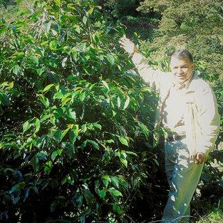 パナマ ベルリナ農園 ティピカ・スペシャルリザーブ(Sサイズ)