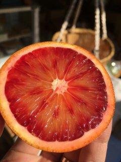愛媛県産ブラッドオレンジ