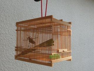 【7月上旬〜8月末販売】送料込み キリギリス♂1匹・竹かご飼育セット(虫竹籠+エサ付き)