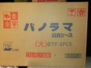 パノラマ飼育ケース(大)お買い得 6個入りセット