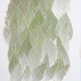 ギンバヒマワリの葉