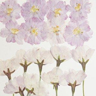 八重桜ミックス