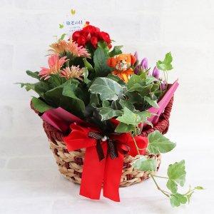 【生花】敬老ポタジェ(季節のお花+観葉植物)