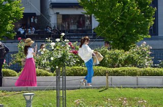 中之島公園 ばら園 女性
