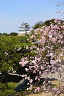 春の明石城 坤櫓