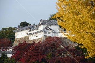 姫路城 紅葉 平成26年