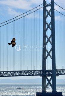 鳶 明石海峡大橋