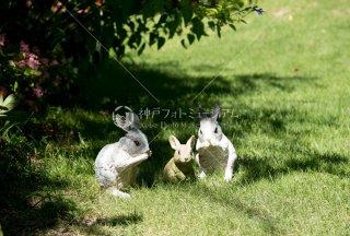 メルヘンの庭 ウサギ 舞多聞