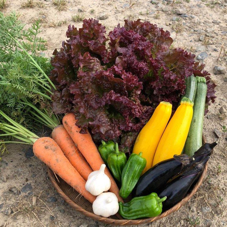 季節の採れたて野菜