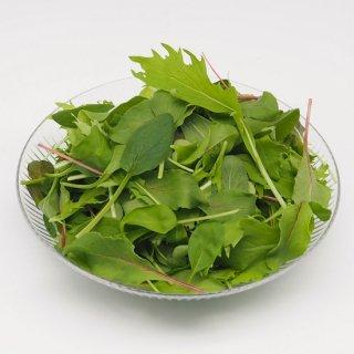 ベビーリーフ(九州産)農薬・化学肥料・除草剤不使用
