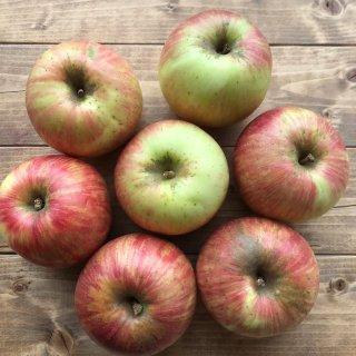 九州産 りんご「つがる」1�入り