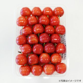 佐藤錦 手詰め(化粧箱入)500g