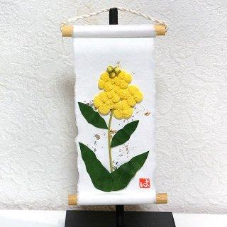 ミニ掛け軸 旬のつづり 菜の花