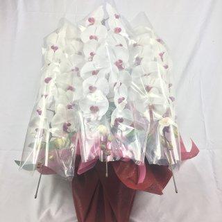 [P0001]胡蝶蘭リップタイプL