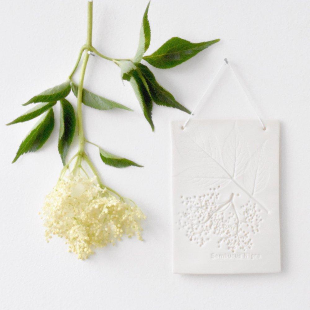 Otchipotchi<br>herbarium plate elder flower