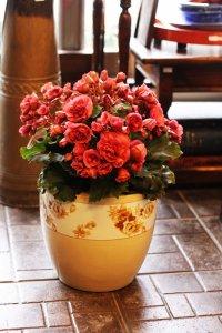 オールドノリタケ 大人ブラウンのバラ 火鉢