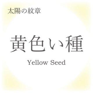 マヤンエッセンス 黄色い種