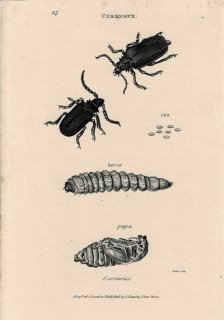 <img class='new_mark_img1' src='https://img.shop-pro.jp/img/new/icons14.gif' style='border:none;display:inline;margin:0px;padding:0px;width:auto;' />Insect Antique Print