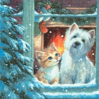 ペーパーナプキン(33)ti-flair:(5枚)Westie & Kittin looking out of Window-TI81