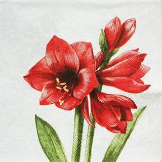 ペーパーナプキン(33)AMB:(5枚)RED AMARYLLIS-AM38
