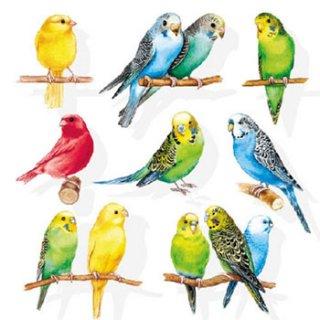 ペーパーナプキン(33)AMB:(5枚)BIRDIES-AM145