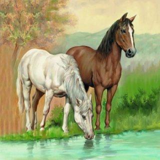 ペーパーナプキン(33)AMB:(5枚)Horses-AM338