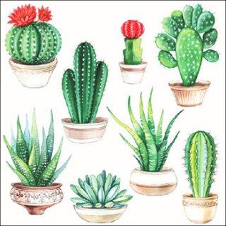 ペーパーナプキン(33)AMB:(5枚)Cactus-AM446