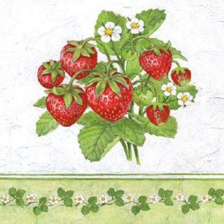 ペーパーナプキン(33)AMB:(5枚)Season Fruit-AM451