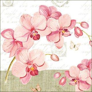 ペーパーナプキン(33)AMB:(5枚)Orchids With Love-AM456