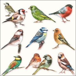 ペーパーナプキン(33)AMB:(5枚)Collection Of Birds-AM461