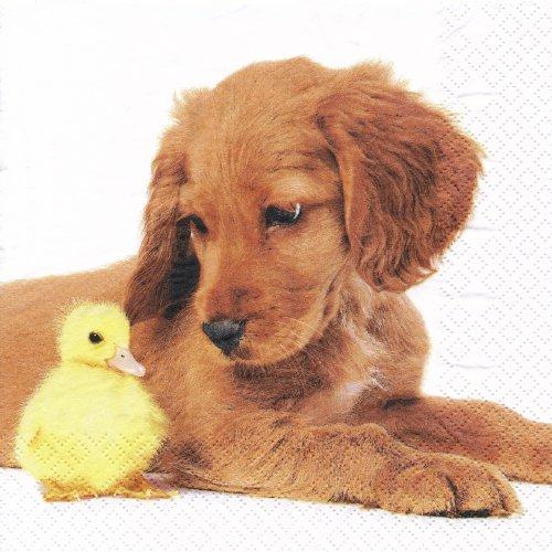 ペーパーナプキン(33)home:(5枚)ベストフレンズ(犬とひよこ)-HO18
