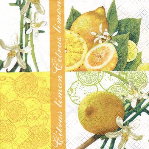 ペーパーナプキン(33)home:(5枚)レモン-211003-HO57