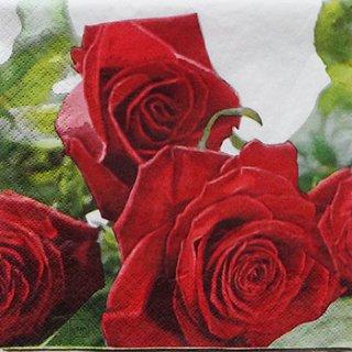 ペーパーナプキン(33)home:(5枚)Roses for you-211017-HO61