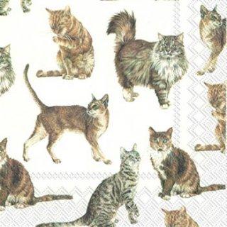 ペーパーナプキン(33)IHR:(5枚)MY PAVORITE CAT(猫)-IH132