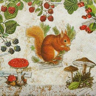 ペーパーナプキン(33)NOUVEAU:(5枚)Squirrel-NO74