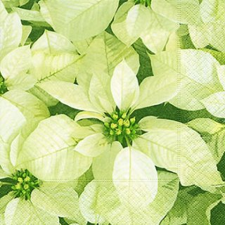 ペーパーナプキン(33)paper:(5枚)White poinsettias-PA263