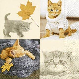 ペーパーナプキン(33)paper:(5枚)Autumn cats-PA270