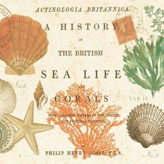 ペーパーナプキン(33)ppd:(5枚)Sea Life-PP51