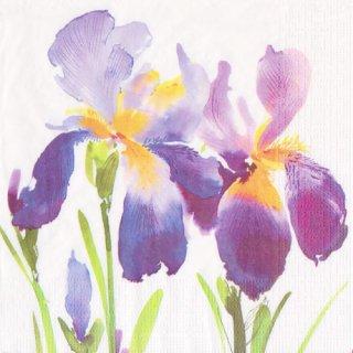 ペーパーナプキン(33)ppd:(5枚)Purple Iris-PP304