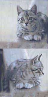 ペーパーナプキン(33)IHR:(5枚)CUDDLY CAT-IH366