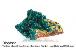 ダイオプテーズ 結晶石 コンゴ共和国 産|Tantara Mine, Shinkolobwe, Kambove Haut-Katanga, DR Congo|Diopside|翠銅鉱|